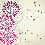 Pink and violet flowers Royalty Free Stock Photography