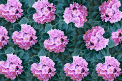 Pink violet flowers background Stock Image