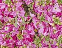Pink violet flowers closeup Stock Images