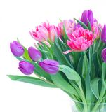 Pink fresh tulips stock photos