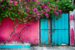 Pink wall of the house with a blue door and a flowering tree on. The old city street. Vintage background exterior Stock Images