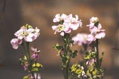Pink warmth flower. Relaxing macro mesmerising money beautiful bokeh galaxy royalty free stock image