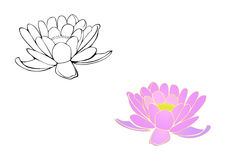 Pink water lilies without background Royalty Free Stock Image