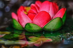 Pink water lily. Bright pink water lily  with reflections in the water Stock Image