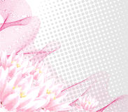 Pink water-lily Royalty Free Stock Photography