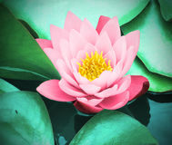 Pink water lily. Stock Image