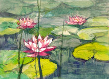 Pink water lily watercolor Royalty Free Stock Image