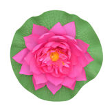 Pink water lily on white background stock photography