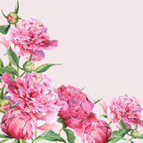 Pink watercolor peonies vintage greeting card Stock Image