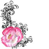 Pink watercolor poppy royalty free stock photos