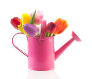 Pink watering can with colorful tulips stock photos