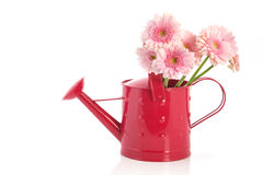 Pink watering can with flowers Royalty Free Stock Photos