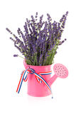 Pink watering can with lavender Royalty Free Stock Photography