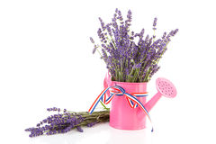 Pink watering can with plucked lavender Royalty Free Stock Photography