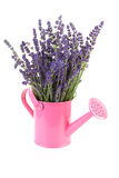 Pink watering can with plucked lavender Stock Photo