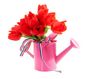 Pink watering can with red Dutch tulips Stock Image