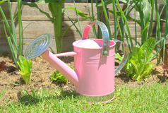 Pink watering can in the vegetable garden Royalty Free Stock Photos