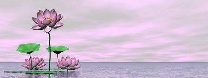 Pink waterlilies and lotus flowers - 3D render Stock Photo