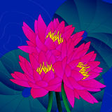 Pink waterlily abstract. Abstract of Pink Water Lilies bloom festively among lily pads vector illustration