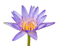 Pink waterlily Royalty Free Stock Photography