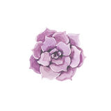 Pink wedding flower decoration Royalty Free Stock Images