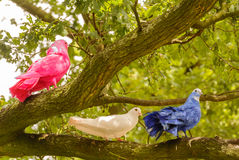 Pink, White and Blue Dove Stock Image