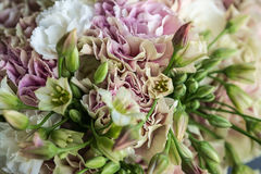 Pink and white carnation bouquet with green allium close up Royalty Free Stock Images