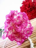 Pink and white carnations flower on bamboo stick and red florals background. Sweet blossoms close-up Royalty Free Stock Image