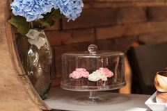 Pink and white cupcakes Royalty Free Stock Photos