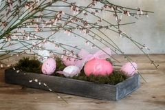 Pink and white easter eggs in a wooden box with moss under bloom. Ing genista or broom, holiday or spring decoration on rustic wood, selective focus, narrow Royalty Free Stock Image