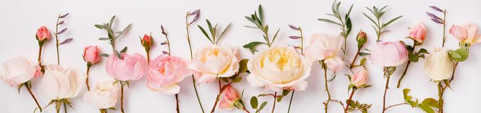 Pink and white English roses panoramic border, banner, wedding romantic background. Flat lay. Wide screen Web banner or flyer with copy space stock image