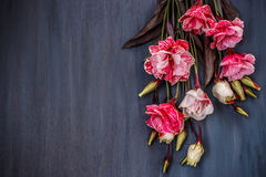 Pink and white eustoma flowers on blue wooden background Royalty Free Stock Image
