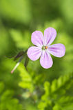 Pink-white flower on green Royalty Free Stock Image