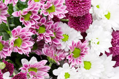 Pink and white flowers Stock Images