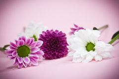 Pink and white flowers Royalty Free Stock Photography