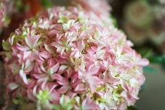 Pink and white flowers. Beautiful bouquet of pink and white flowers Stock Photography