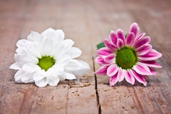 Pink and white flowers Royalty Free Stock Image