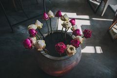 Pink and White Flowers in a Grey Vase stock photography