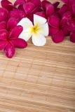 Pink and white Frangipani Plumeria flower on the mat Stock Photos