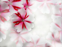 Pink White Light Flower background Royalty Free Stock Photos