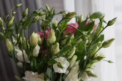 Pink and white Lisianthus flower decoration. Royalty Free Stock Image