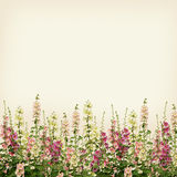 Pink and white mallow flowers border on beige Stock Photos
