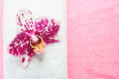 Pink and white orchid Royalty Free Stock Photography