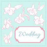 Pink and white orchid on a blue background. Design, invitations, cards, greetings Stock Image