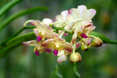 Pink and white orchids on green Stock Image