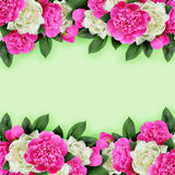 Pink and white peonies flowers borders
