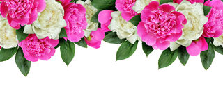 Pink and white peonies flowers header Royalty Free Stock Image