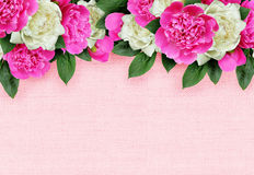Pink and white peonies flowers header Stock Images