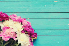Pink and white peonies over old turquoise wooden background. Floral frame / background with beautiful pink, purple and white peonies on old turquoise wooden Stock Photography