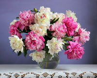 Pink and white peonies on a purple background. Flowers in a vase Stock Image